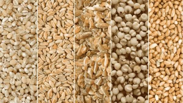Anti-Aging Benefits of Whole Grains-min